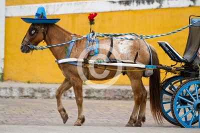 horse carriage in izamal