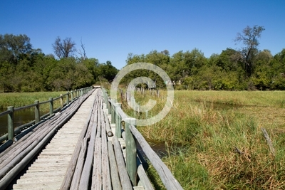 wooden bridge in the okavango delta